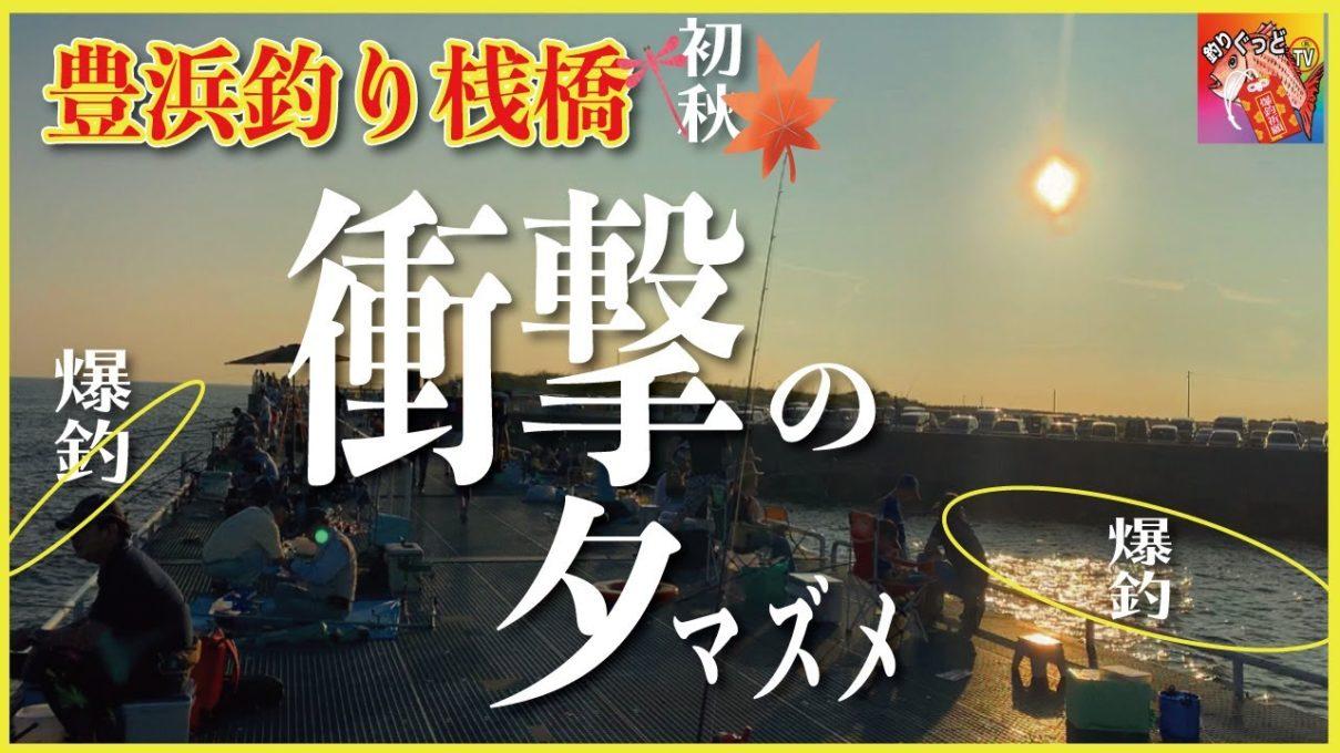 【衝撃】夕マズメの爆釣。18時〜19時。【豊浜釣り桟橋】